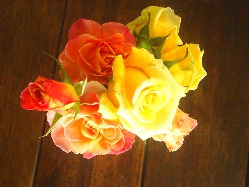 quando, na primavera de 2005, as primeira rosas surgiram esta foi uma delas e Fezoca disse , esta é para Meg