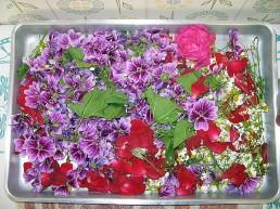 flores_secas_donana.jpg