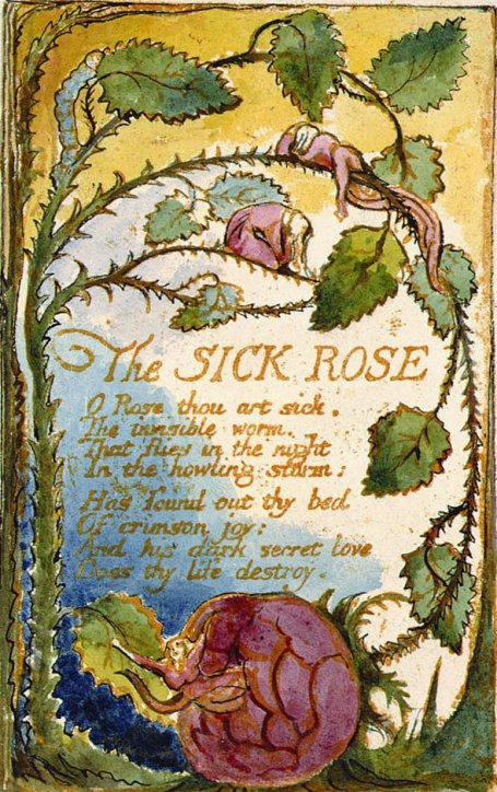 A rosa doente- The sick rose