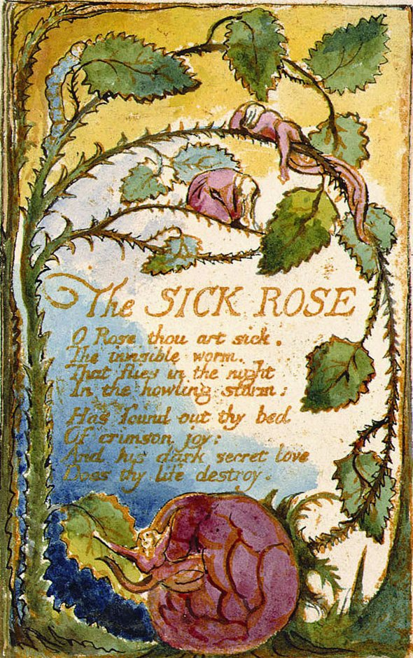 A rosa doente- The sick rose